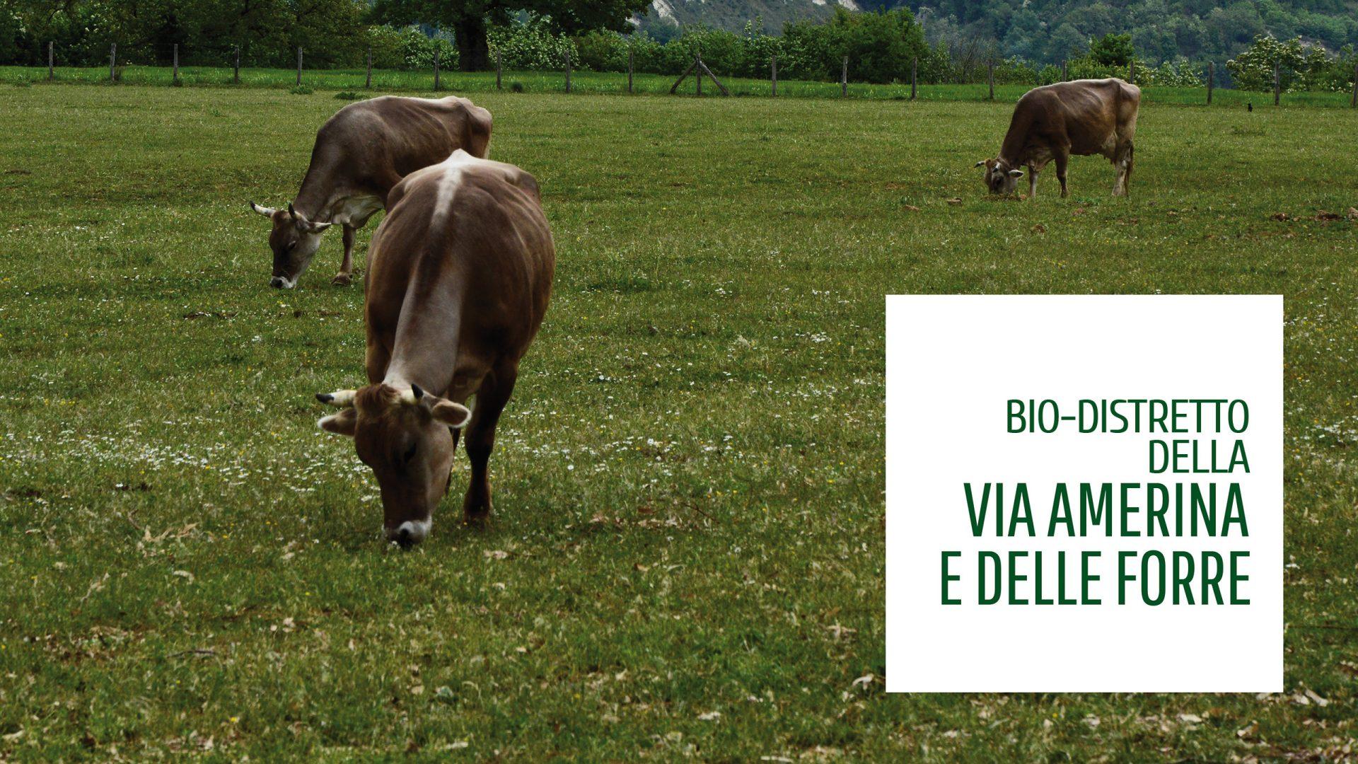 Approvata la legge della Regione Lazio sui biodistretti