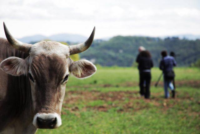 La fattoria Lucciano: eccellenza da Gambero Rosso