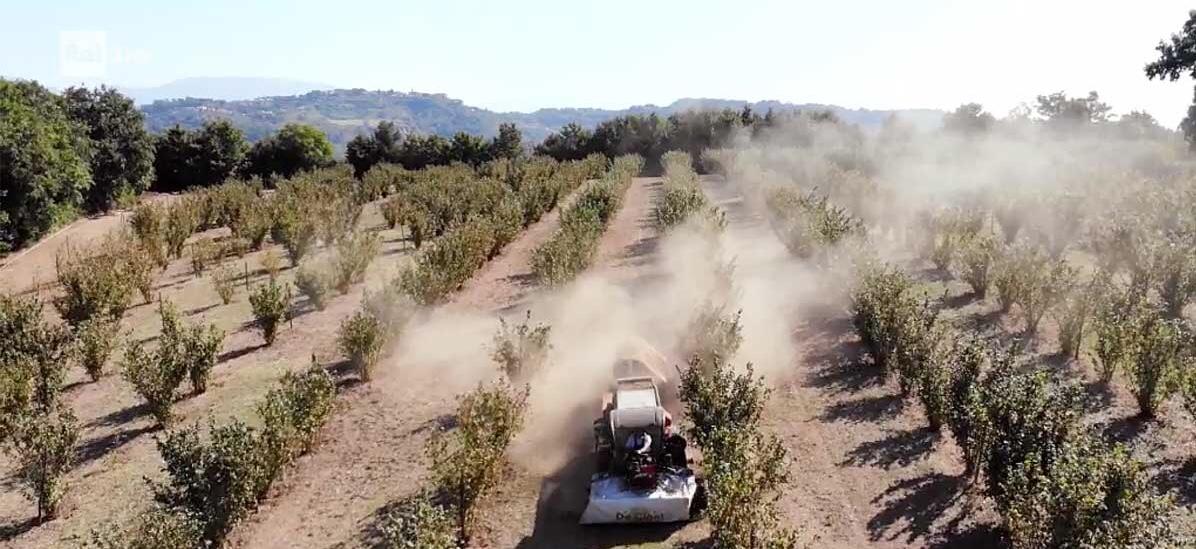 Pubblichiamo la lettera pubblica inviata al Prefetto di Viterbo in merito alla questione dei pesticidi nell'area del Biodistretto della Via Amerina e delle Forre