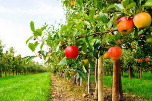 Rapporto Legambiente, nella frutta che mangiamo oltre il 70% di pesticidi