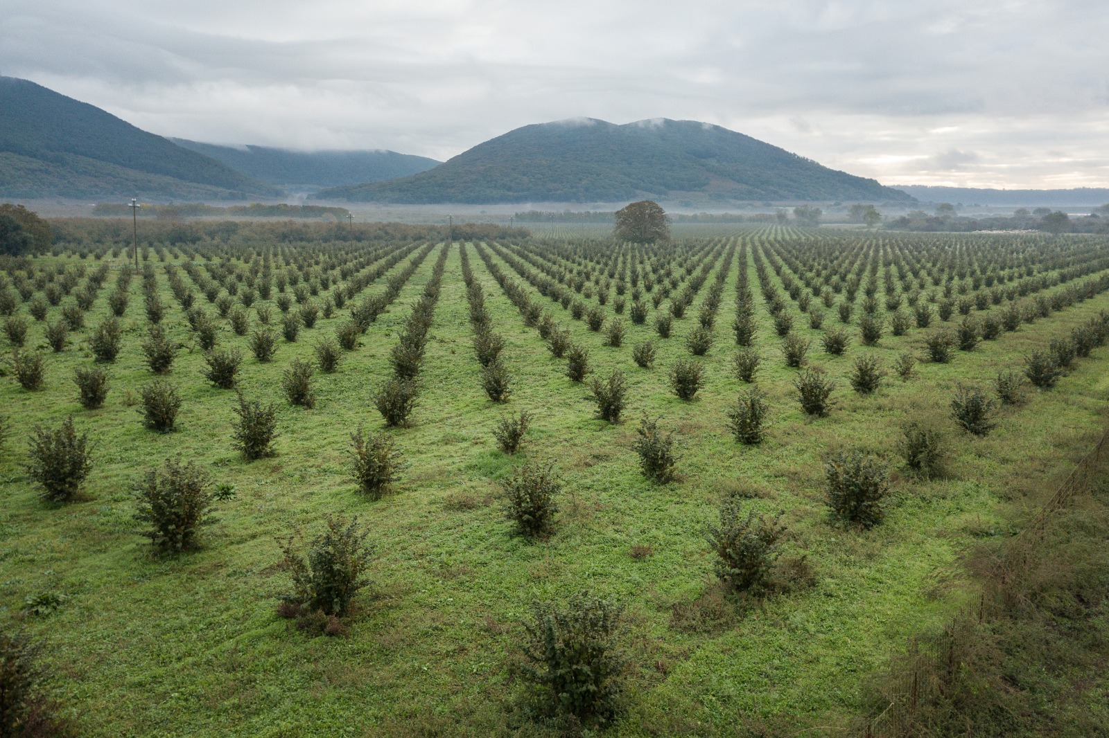 Gli effetti dei prodotti fitosanitari sulla biodiversità nei noccioleti della provincia di Viterbo