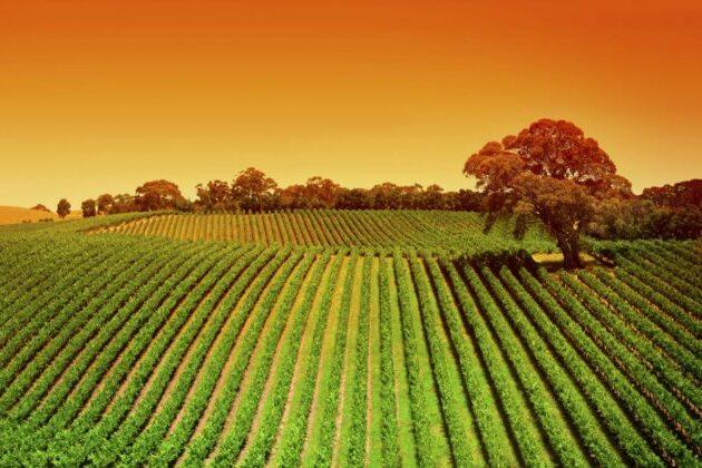Produttori e studenti per un'agricoltura sostenibile
