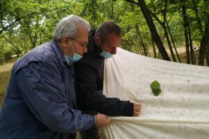 Avviati i monitoraggi entomologici